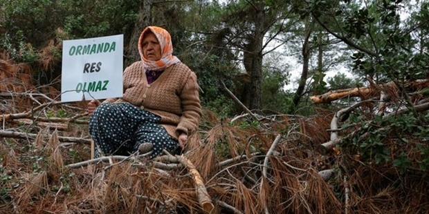 İzmir'in köyündeki 49 yıllığına kiralanan arazide rüzgar enerjisi santrali için 1200 çam ağacı kesildi