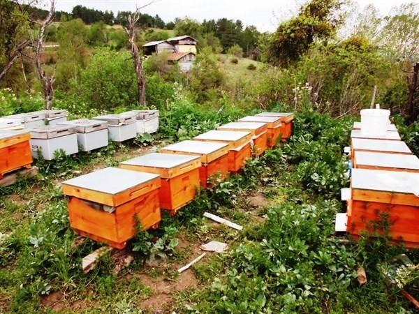 Zonguldak Orman Bölge Müdürlüğü; Bal Üretim Ormanı Sayısını Arttırdı