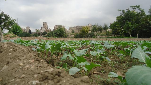 İstanbullu çiftçiler tarihi bostanlarını korumak için mücadeleye devam ediyor