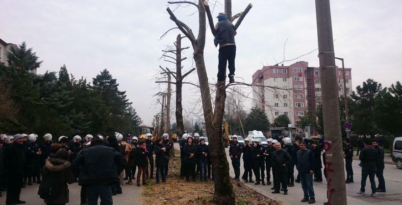 Kocaeli'de baskı ve gözaltılara rağmen ağaç nöbeti devam ediyor
