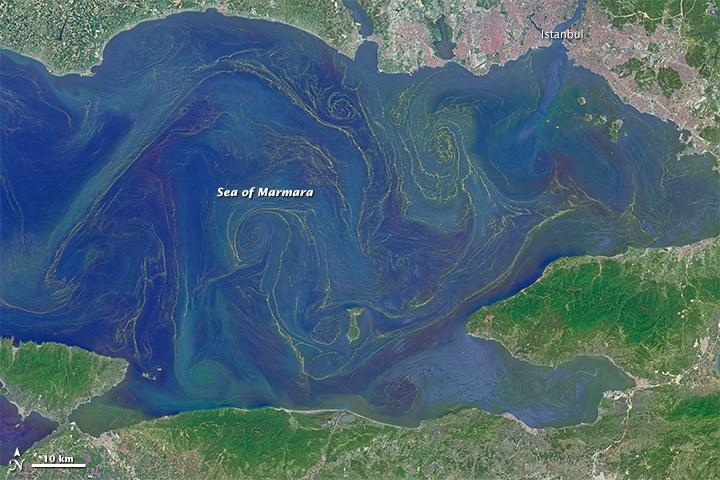 """""""Marmara Denizi Acilen Doğa Koruma Alanı İlan Edilmeli"""""""