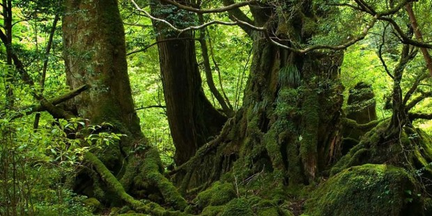 Orman ağaçları sosyal varlıklardır!