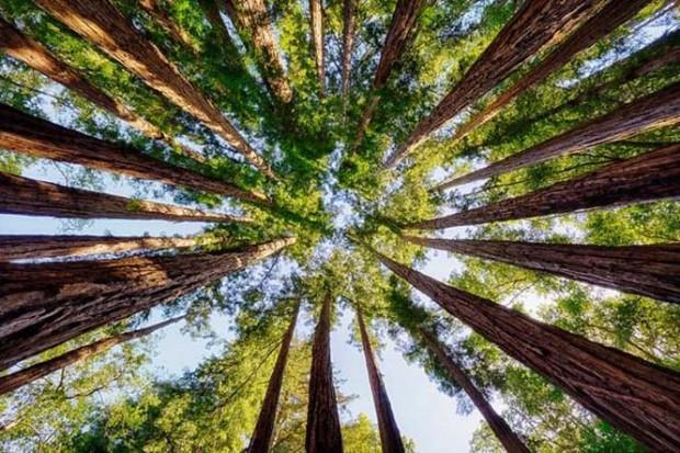 Ülkenin tüm ormanları satışa çıkarılıyor