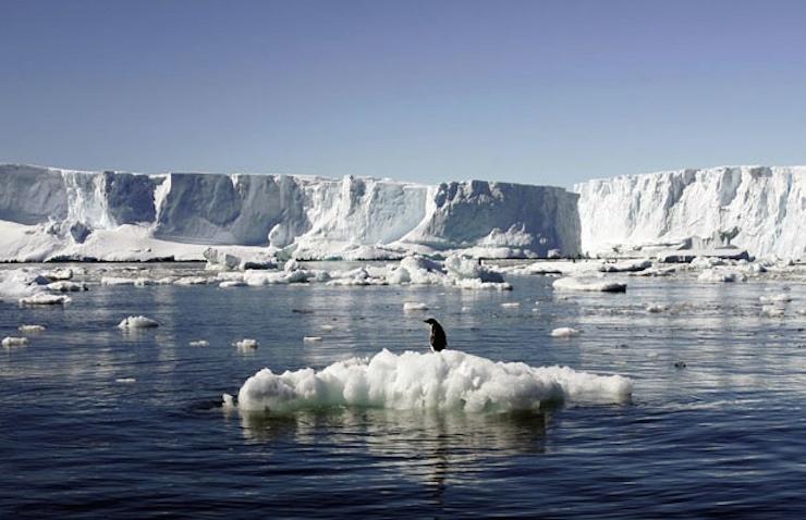 Antartika'da buzdağı koptu, yiyecek bulamayan 150 bin penguen öldü