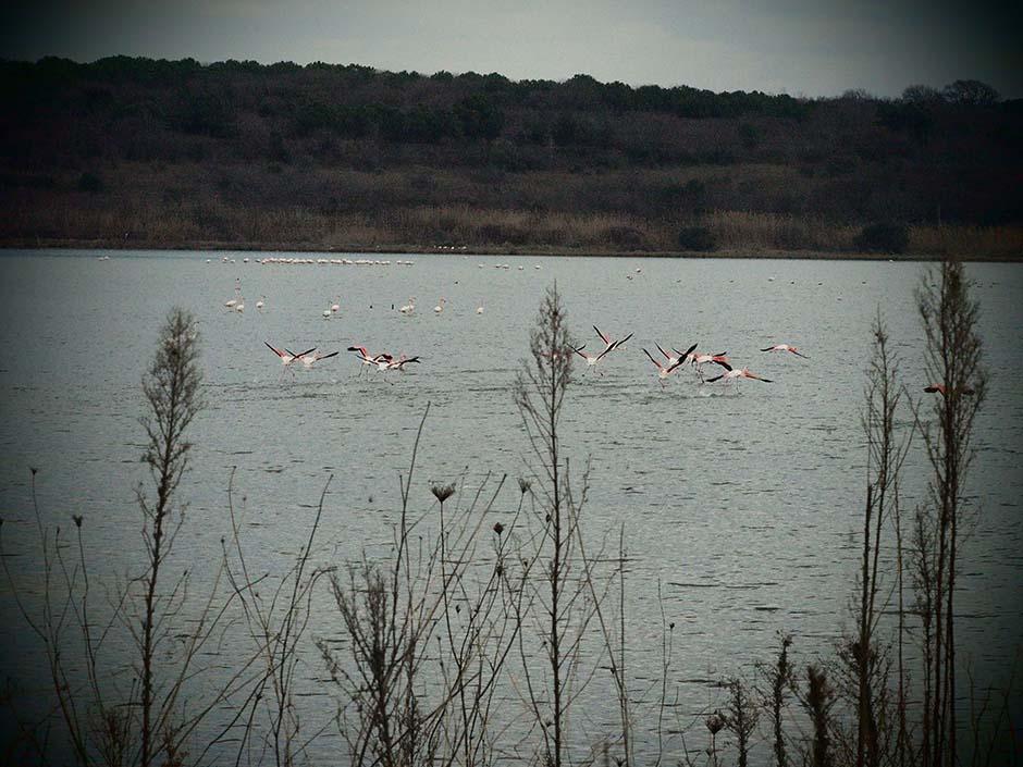 Hersek Lagün Gölü'nde Son Sözü Kuşlar Söyleyecek.
