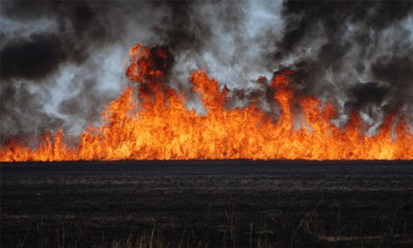 Mersin'deki Kuş Cenneti'nde yangın çıktı: Müdahale edilemiyor!