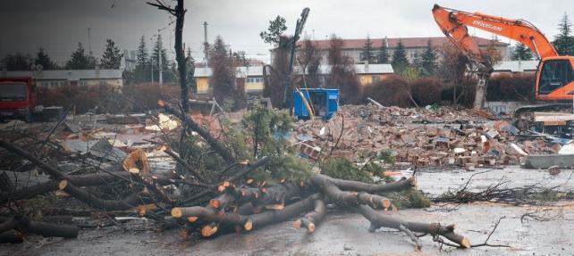İş makineleri ezdi geçti… Ankara'da ağaç katliamı