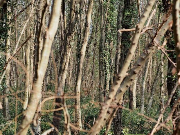 Rahatı kaçan orman