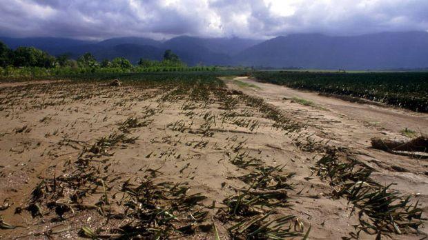 İklim Değişikliği sonucu gıda kıtlığı 2050'de yarım milyon insanın yaşamına mâl olacak