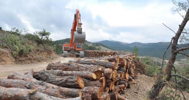 Siyasi partiler ormanlara varlık değil kaynak muamelesi yapıyor