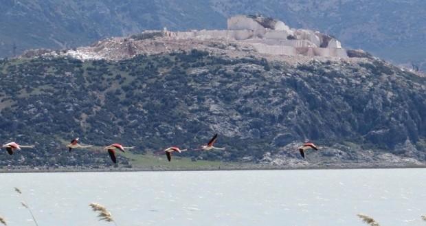 Yarışlı Gölü çevresini saran mermer ocakları flamingoları kaçırdı