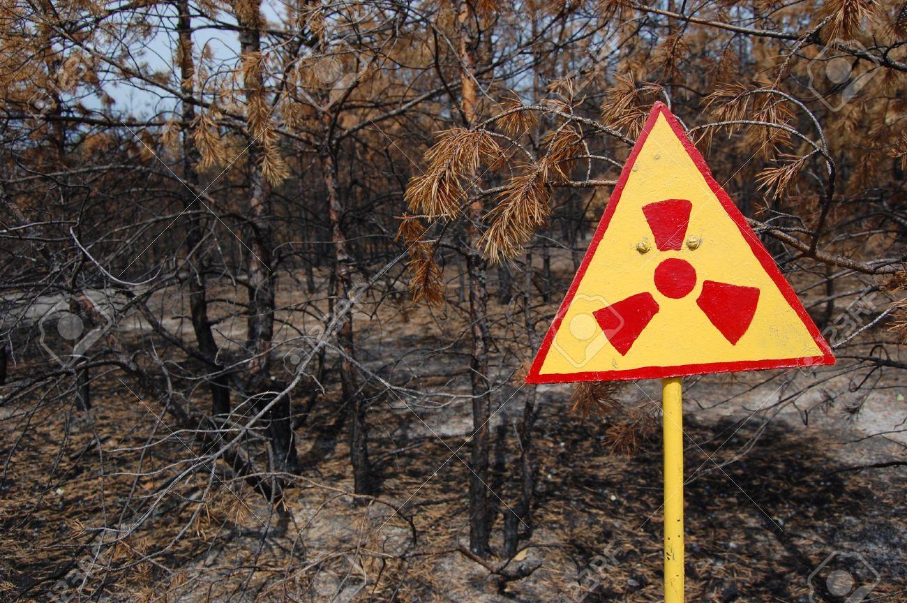 Ölemeyen ağaçlar diyarı Çernobil