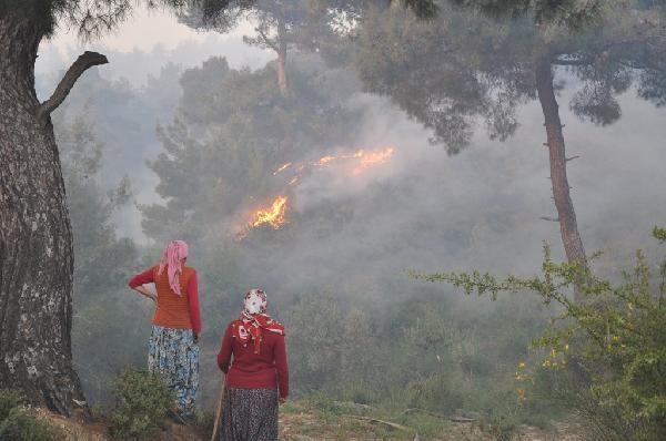 Aydın'da zeytinlik alanda çıkan yangın söndürüldü: 15 hektar ormanlık alan zarar gördü