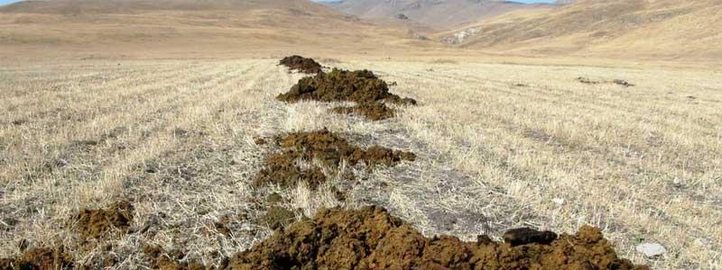 Toprak doğasının diyalektiği