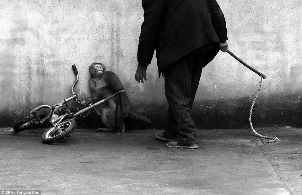 İran yaban hayvanlarının kullanıldığı sirkleri  yasakladı