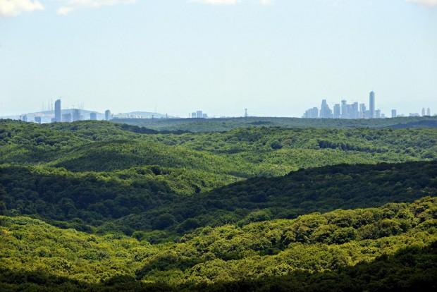 Belgrad Ormanı'na Sadakat