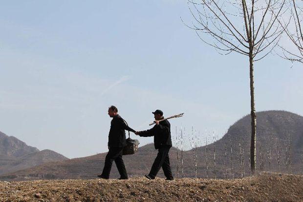 Çinli iki engelli arkadaş 10 yılda 10 bin ağacı imece usülü dikti