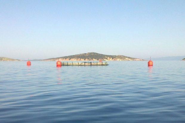 Ayvalık'ta gizlice lağım dökülen tabiat parkı denize balık çiftliği izni çıktı!