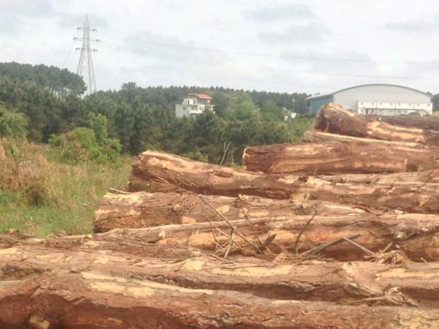 İstanbul Valiliği, Orman Bölge Müdürlüğü ve Çevre ve Şehircilik İl Müdürlüğü'ne soruyoruz: Bu ağaç katliamından haberiniz var mı?