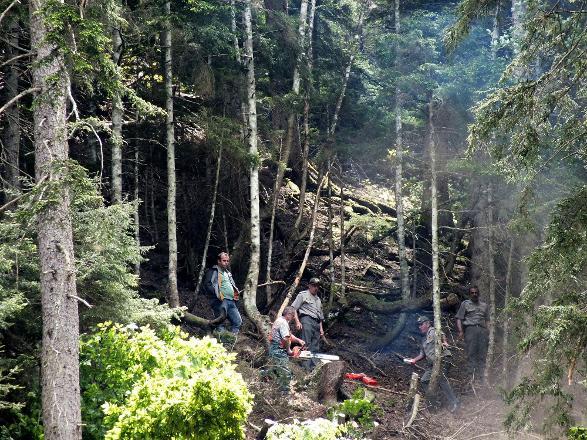 Artvin'de elektrik hattı için 700 ağaç kesildi… Köylülerden büyük tepki