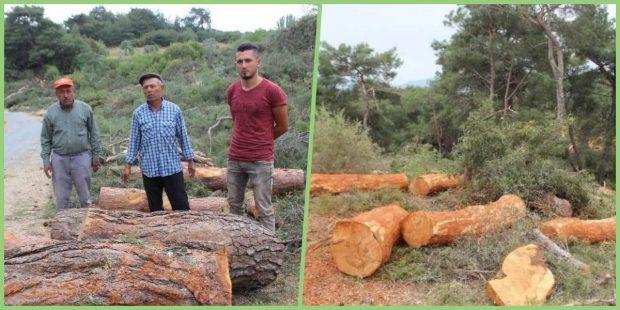Aydın'da 200 yıllık ağaçları yok eden kıyıma karşı kampanya