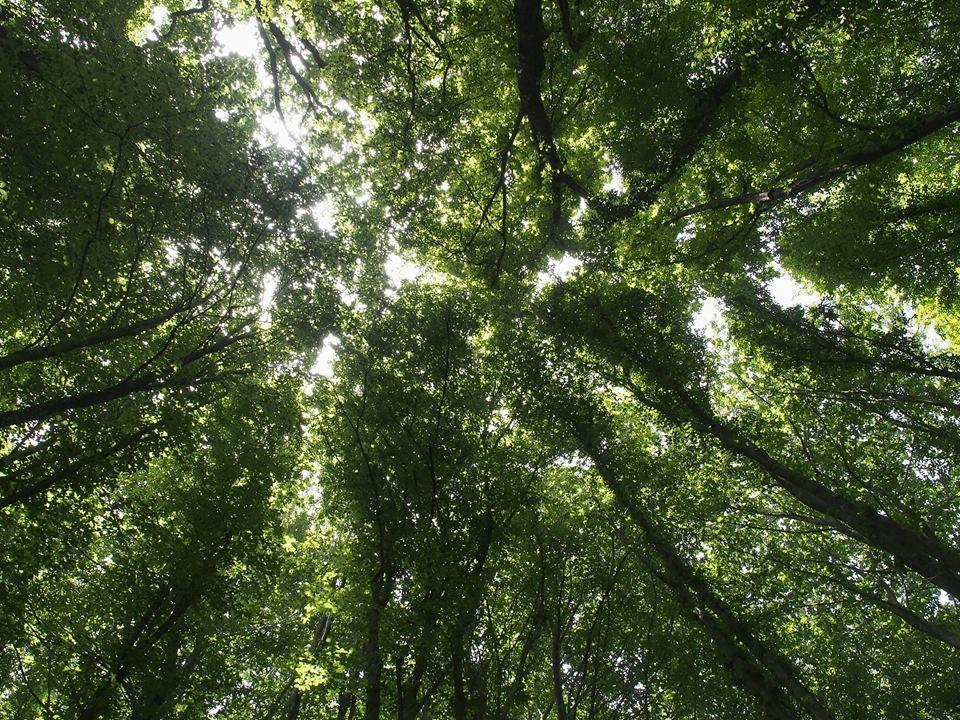 Yeni Türkiye'nin parsellenmiş distopyasına yolculuk – Belgrad Ormanı dekovil hattı keşif gezimizden notlar…