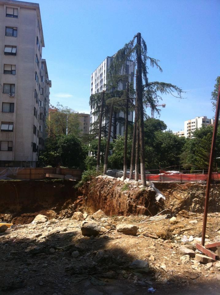 Ağaçların yerini beton almasın! Neden mi?