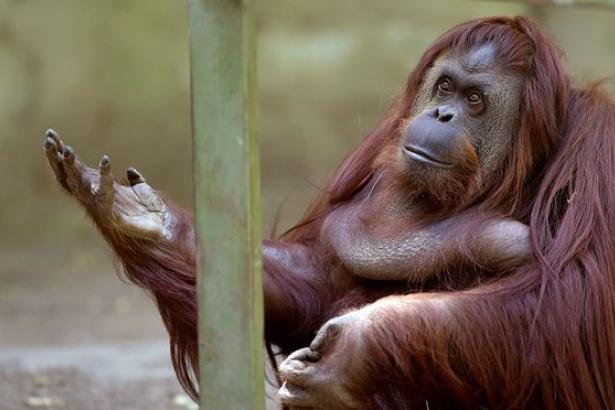 Buenos Aires hayvanat bahçesi kapatılacak: Esaret onur kırıcı