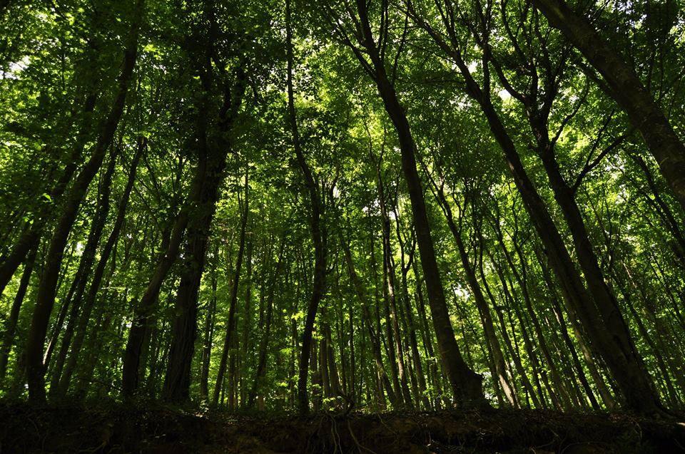 Belgrat Ormanı İki büyük medeniyete başkentlik yapmış İstanbul'un varolma sebebidir.