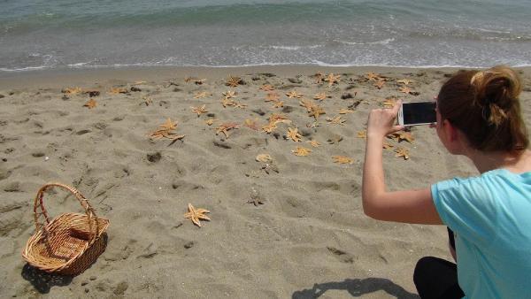 Tekirdağ Kumbağ'da yüzlerce deniz yıldızı karaya vurdu