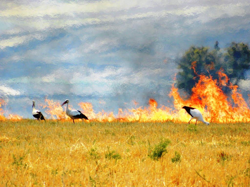 Anız yakımı ormanlara zarar verdiği, havayı ve çevreyi kirlettiği için bu yıl da yasak