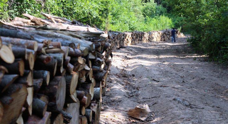 Amasra'da enerji iletim hattı için ağaç kıyımı yapıldı, 43 bin ağacın daha kesilmesi planlanıyor