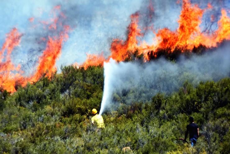 Bodrum'da piknikçilerin neden olduğu orman yangını, 35 hektar alanı kül etti