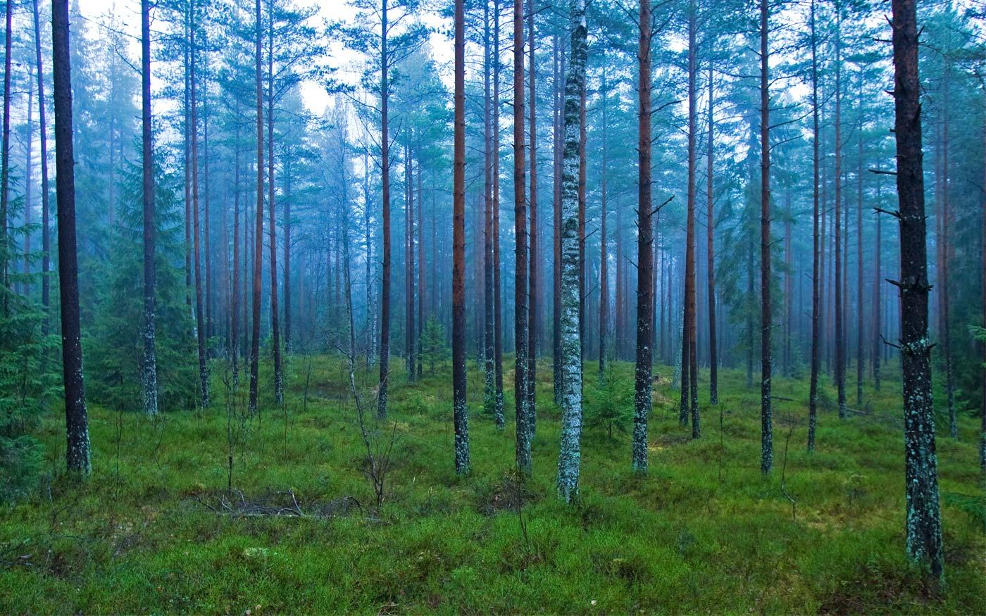 Norveç Ormanları Tahrip Etmeyi Yasaklayan İlk Ülke Oldu