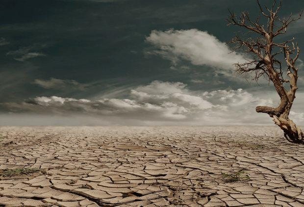 Ormanlar ve iklim değişikliği: 6 dereceden sonra hayat var mı?