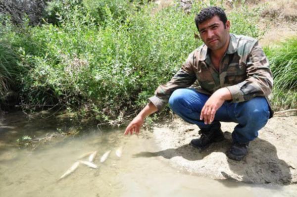 Elbistan'da belediye balık katliamı yaptı