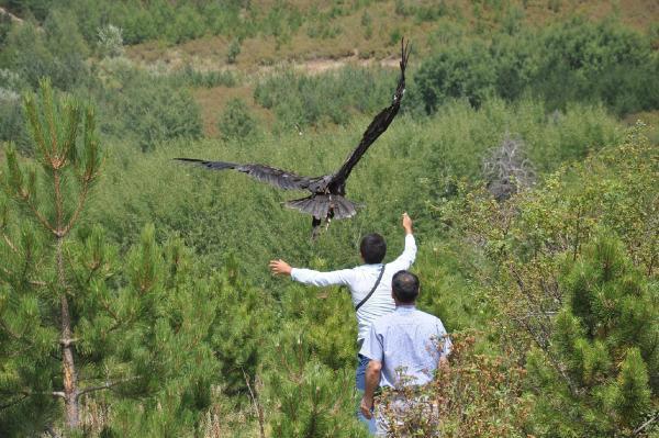 Tedavi edilen 2 Kara Akbaba Kalabak Ormanları'nda doğaya bırakıldı