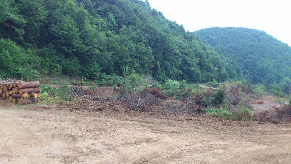 Doymuyorlar! Bartın'da çöp toplama alanı açmak için orman katliamı yapılıyor!
