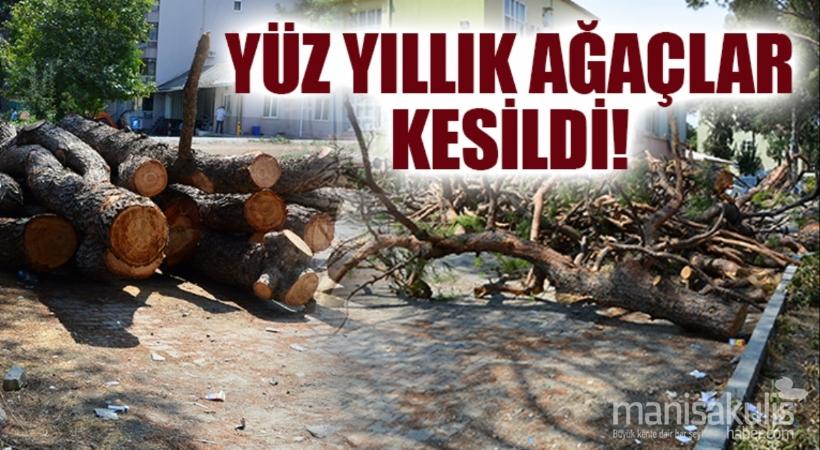 MORRİS Şinasi Çocuk Hastanesi bahçesindeki ağaçların kesilmesi vatandaşın tepkisini çekti.