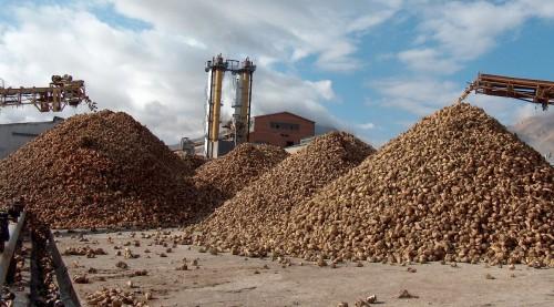 Şeker üretimi de dışa bağımlı hale geliyor