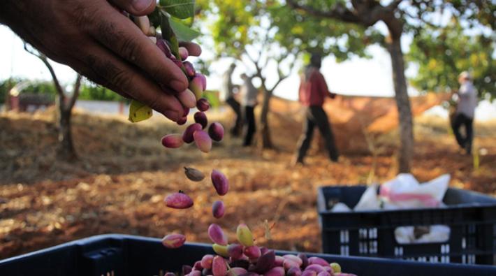 Şanlıurfa'da fıstık arazilerine Limak gölgesi: Çimento fabrikası için taş ocağı açmak istiyorlar