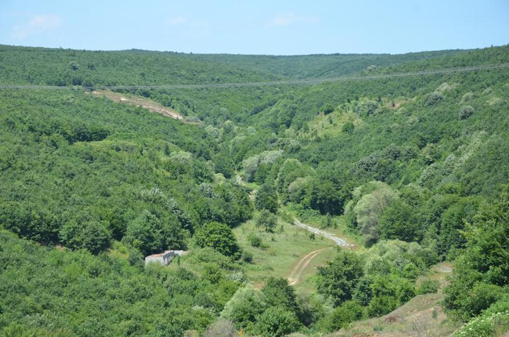 Millete küfür edenler istedi, Bakanlık verdi: Saray'da 180 dönüm orman katledilecek!