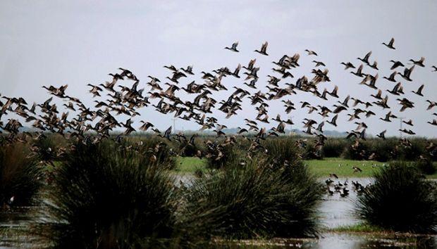 Kızılırmak Deltası, Unesco Dünya Mirası geçici listesinde