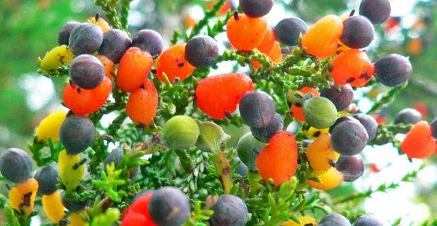 Doğanın mucizeleri sanata dönüştü: 40 farklı meyve veren ağaç