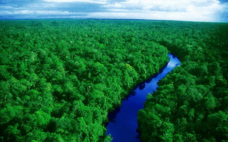 Binlerce canlı türü tehlikede: Böyle giderse gelecek yüzyılda el değmemiş toprak kalmayacak
