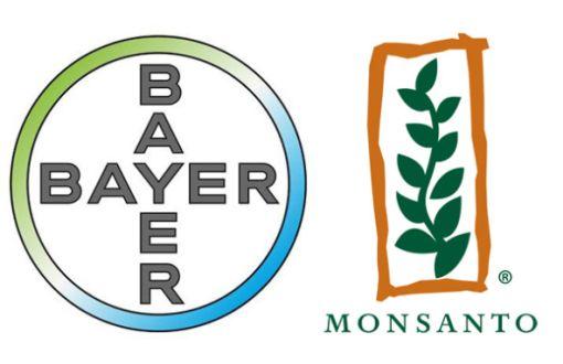 Bayer'in GDO'lu Tohum Üreten Monsanto'yu Almasının Anlamı