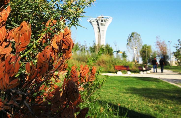 Milyonlarca lira harcanan botanik fuarı EXPO'yu semizotu bastı, anıt zeytin ağaçları kurudu!