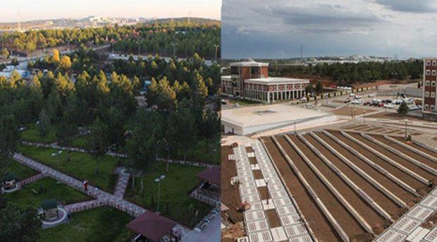 Bilecik Şeyh Edebali Üniversitesi'nde ağaç katliamı