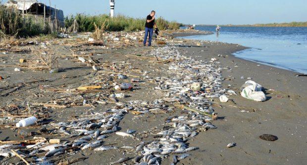 Mersin'de binlerce balık sahile vurdu: 'Suçlu Adana'daki atık su arıtma tesisleri'