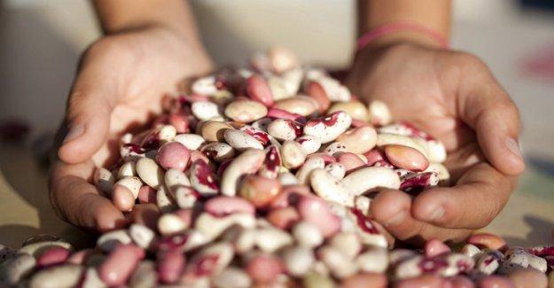 Muğla Belediyesi, tohum bankası kuruyor